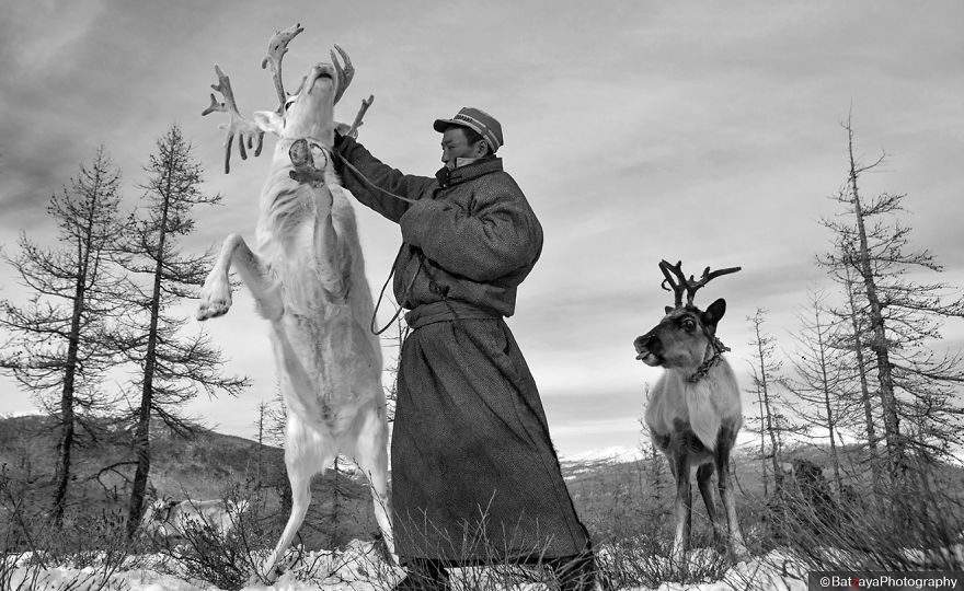 Tsaatan's life is only based on their Reindeers. They don't have any other animals, except of few horses, but they use them only in summertime