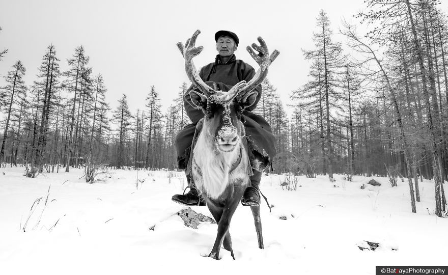 Tribal Leader Mr. Ganbaa had already prepared approximately 20 reindeers, 3 guides for our trip